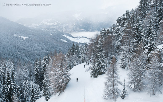 Wooded pistes above Montalbert, La Plagne