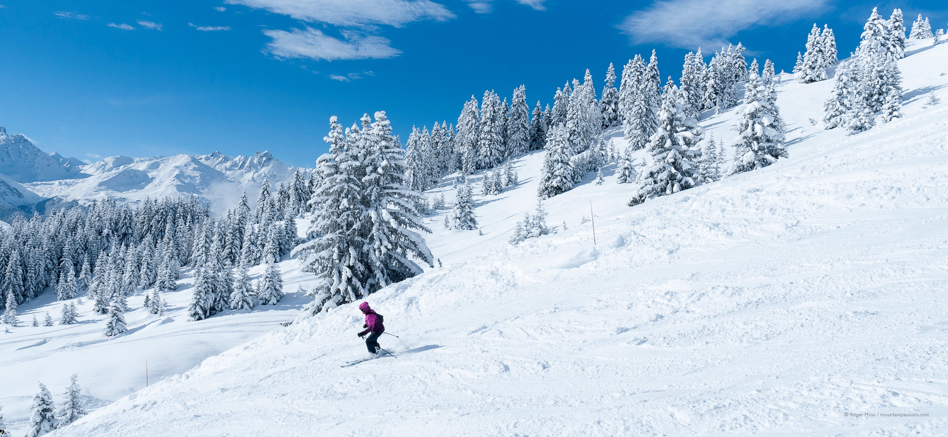 Skier on fresh snow with snow-dusted pine trees.