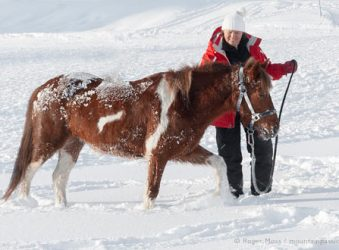Skier with pony in snow at ski-joering centre