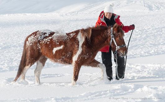 Winter Activities with Animals