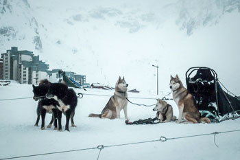 Sled dogs in Tignes ski resort at dusk, Espace Killy, French Alps.