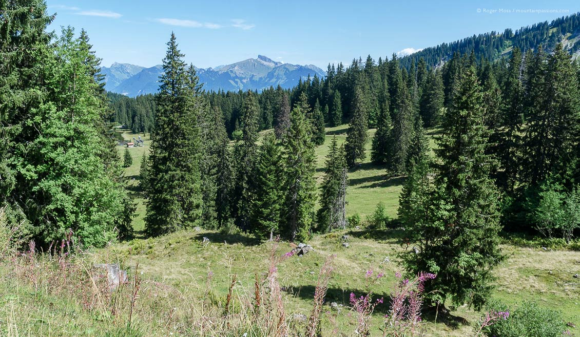 Mountain pastures and trees, Collombey, Valais