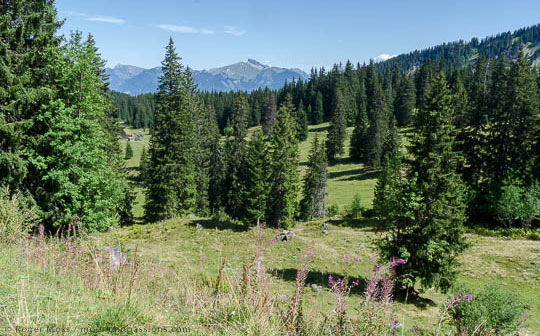 Alpine pastures and forest looking towards Lac Léman above Châtel, Swiss border.