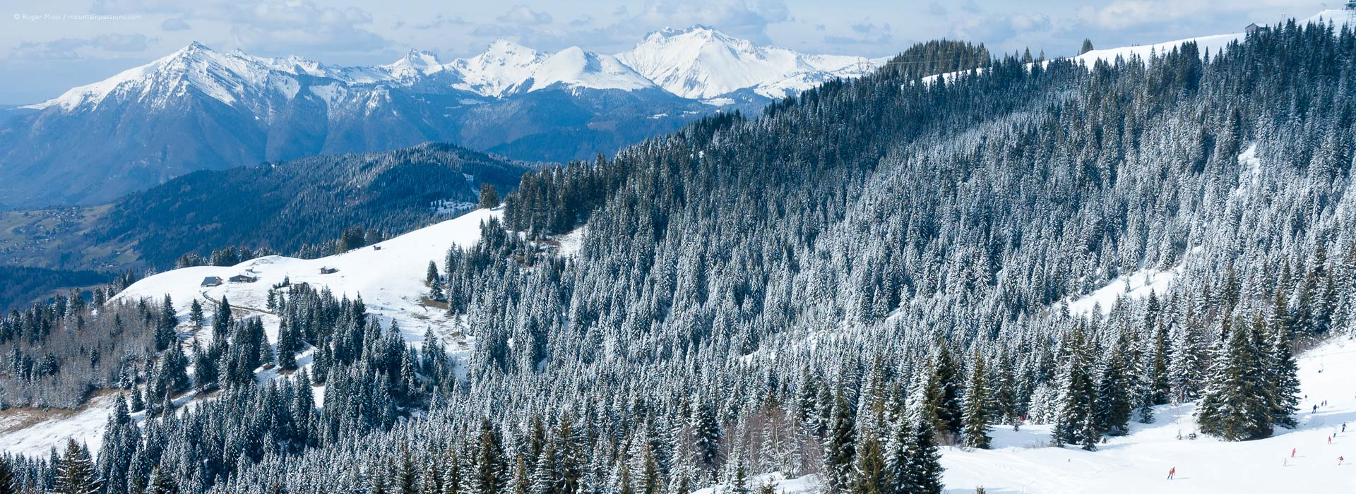 High view of snow-dusted mountain forests, with ski pistes