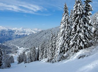 Snow on trees in ski resort of Flaine, Grand Massif