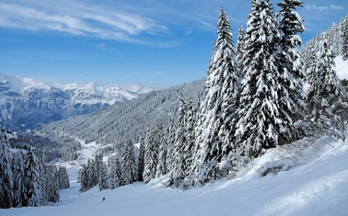 Skier on piste with snow-laden trees, Grand Massif.