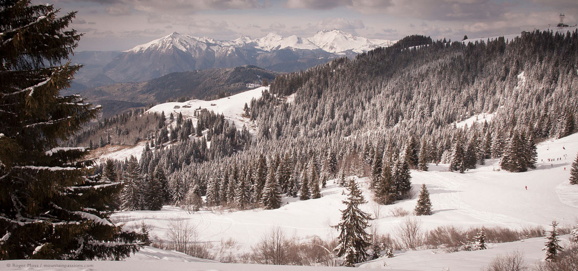 Wide view of mountainside with forests and skiers