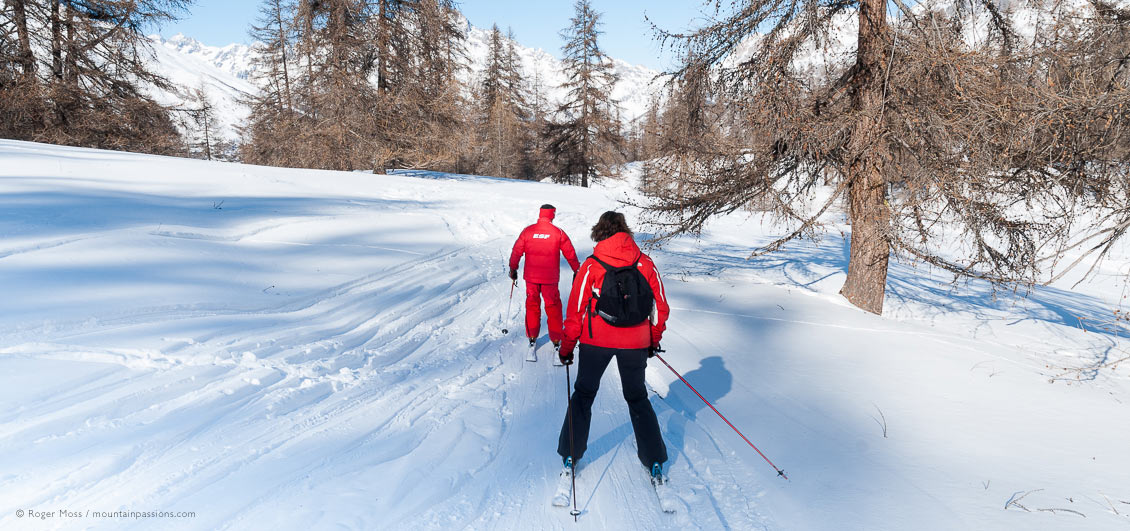 Rear view of two skiers in wooded glade at Puy Saint Vincent