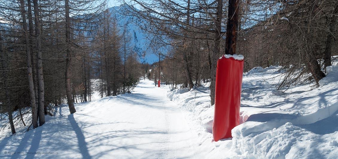 Skier's-eye view of wooded ski piste in sunshine at Montgenevre.