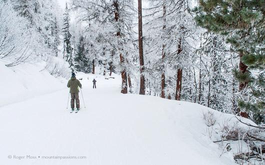 Forest piste, Les Arcs