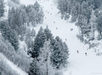 Forested piste, Les Arcs