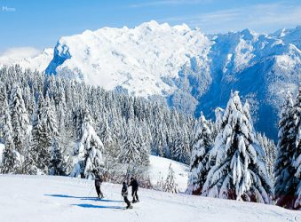Skiers on forested piste, Grand Massif