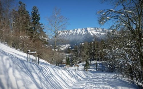 Snow-covered path among trees, with views of the Massif de la Chartreuse, French Alps.