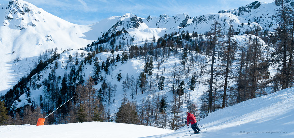 Skier descending piste beside forest with mountainside at Montgenevre, French Alps.