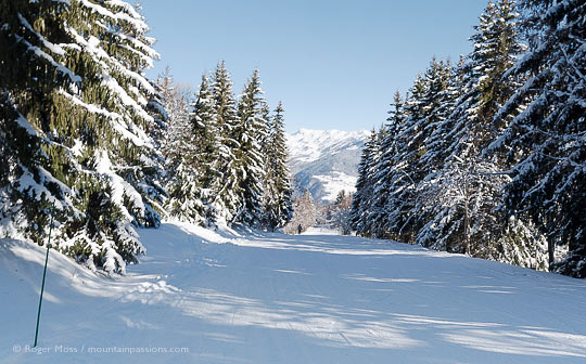 Wide view of tree-lined ski piste above Doucy, near Valmorel, French Alps.