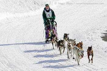 Dogsledding team competing in La Grande Odyssee, French Alps