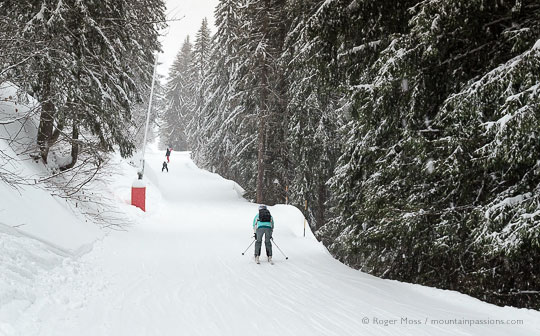 Skiers on piste among tall trees in the Grand Massif, French Alps.