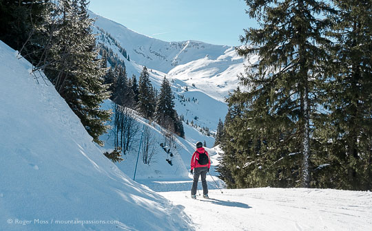 Skier on piste between trees near Plaine Dranse, Chatel, Portes du Soleil