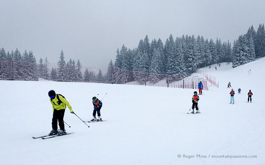 Skiers on misty piste with snow-dusted trees