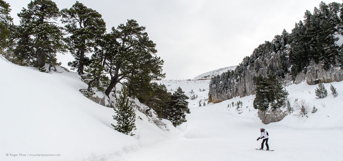 Lone snowbaorder on piste between snow-covered pine trees